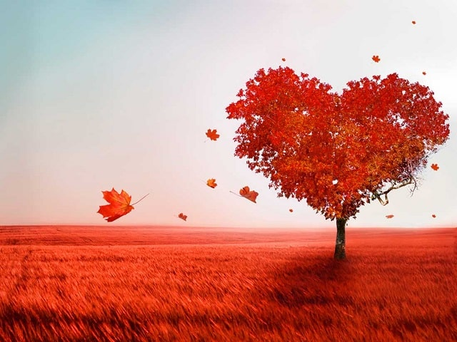 poesie per lei d'amore