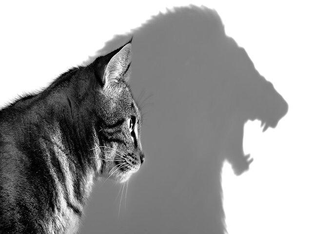 immagini forza e coraggio