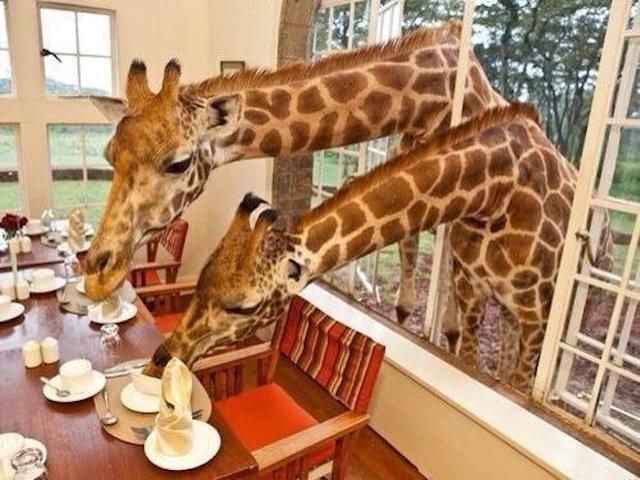 fare una buona colazione