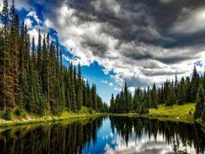 foto della natura
