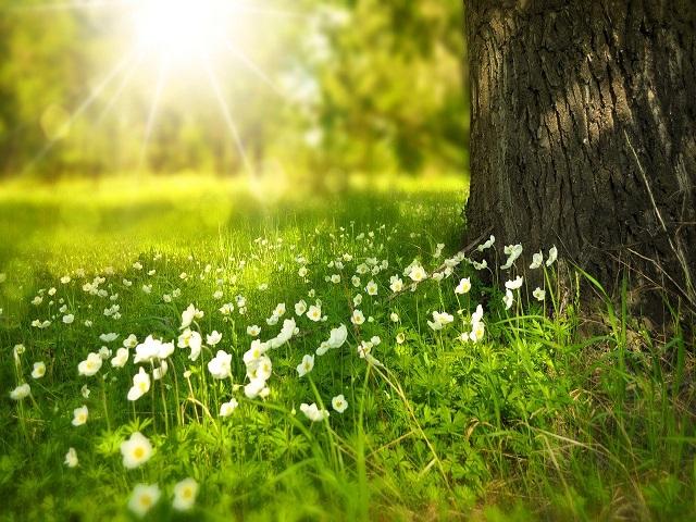 buongiorno con i fiori frasi