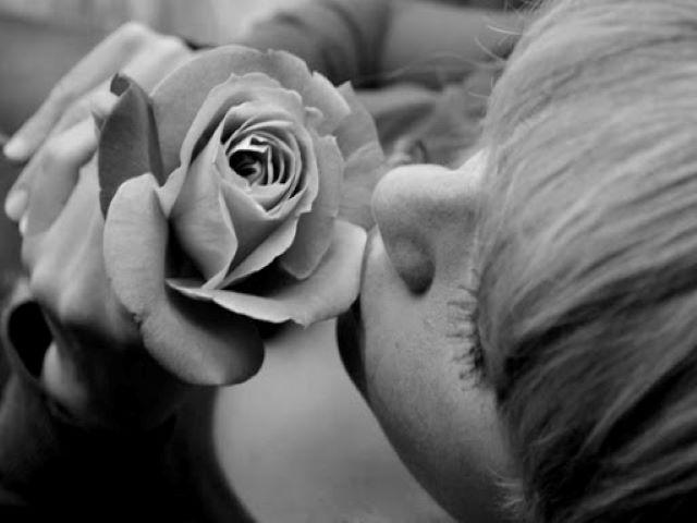 fiori immagini rose