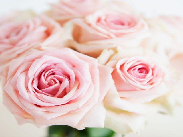 fiori rose immagini