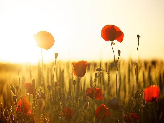 frasi d amore fiori