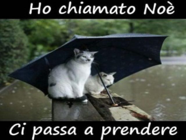 frasi divertenti sulla pioggia