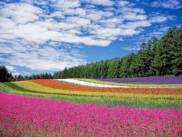 frasi e aforismi sui fiori
