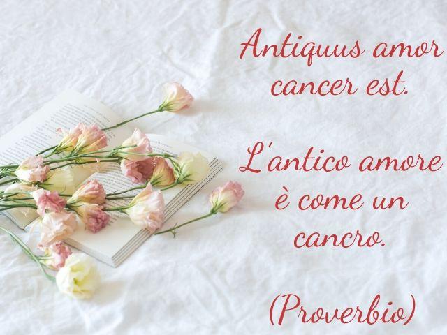 frasi in latino d amore