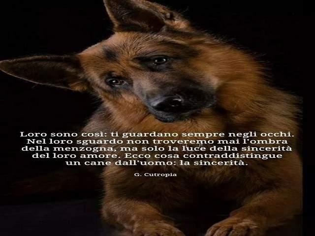 frasi sugli animali belle