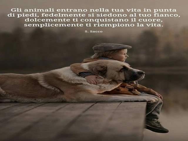 frasi sugli animali cani 2