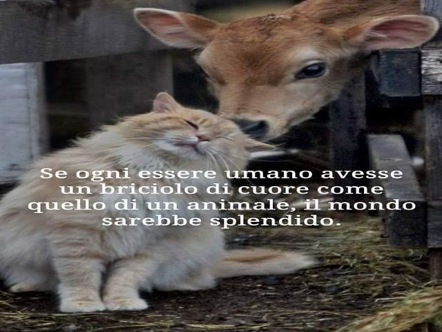 frasi sugli animali famose