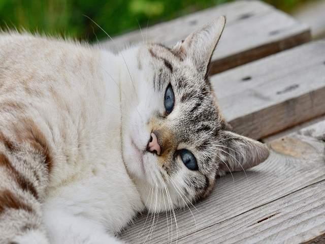frasi sugli animali gatti