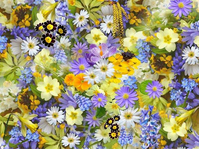frasi sui fiori colorati