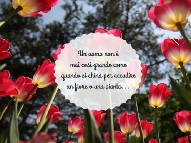 frasi sui fiori e donne