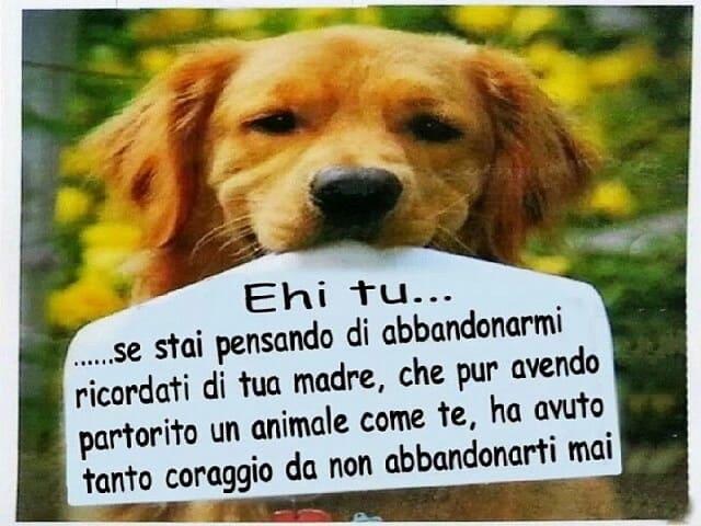 frasi sull'abbandono dei cani