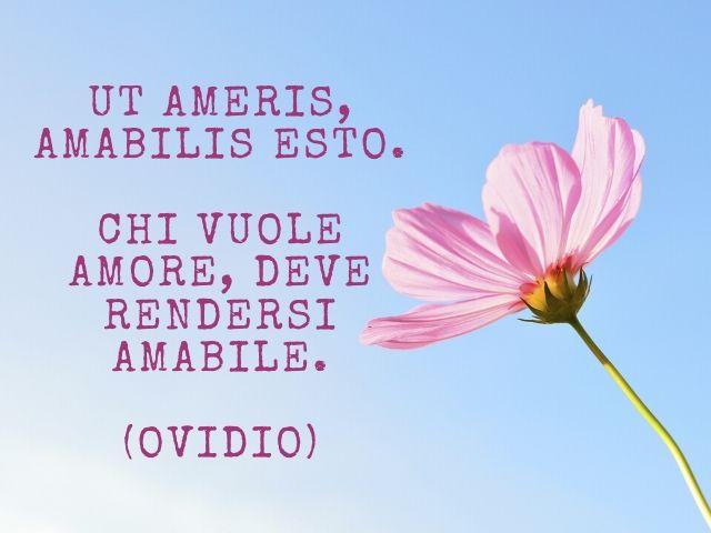 frasi sull amore in latino