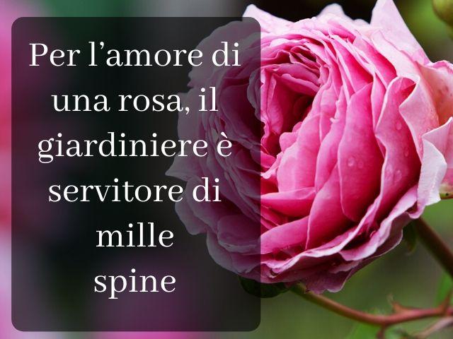 frasi sulle rose d amore