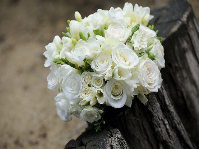 immagini rose bianche