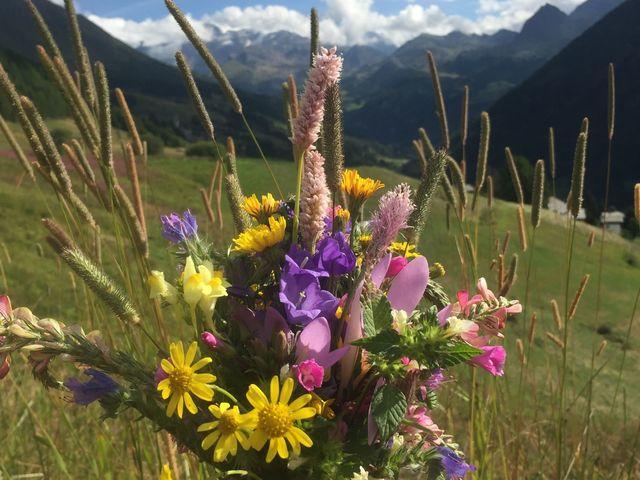 immagini di fiori montagna
