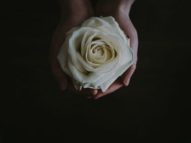 immagini di rose bianche
