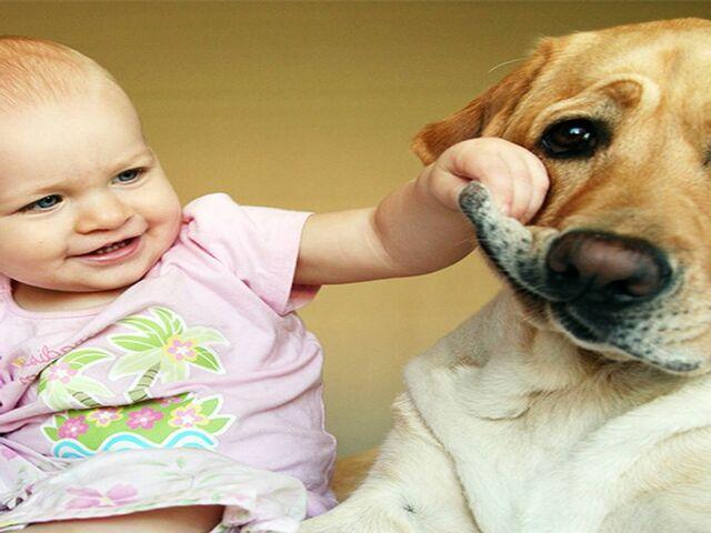 immagini divertenti cani