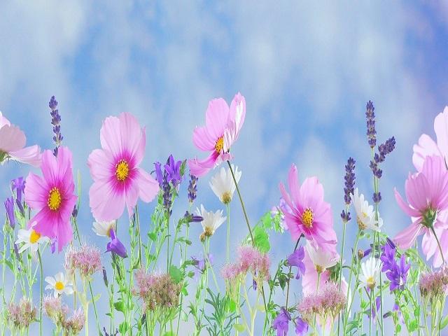 immagini fiori con frasi