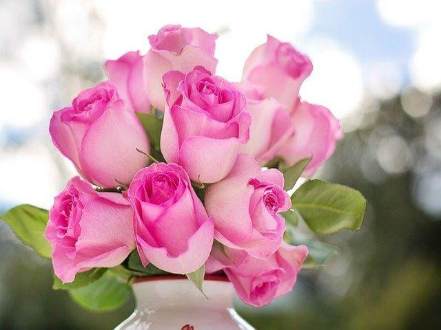 immagini rose rosa
