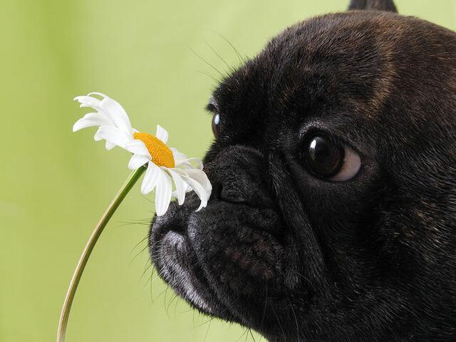 immagini sui cani