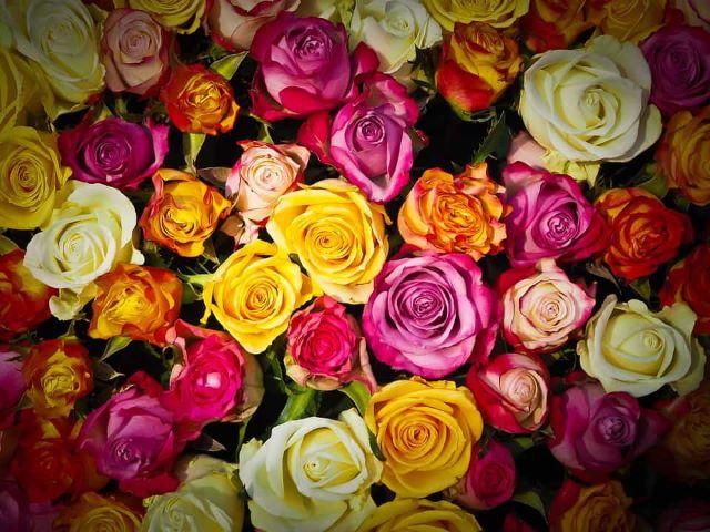 mazzo di rose immagini