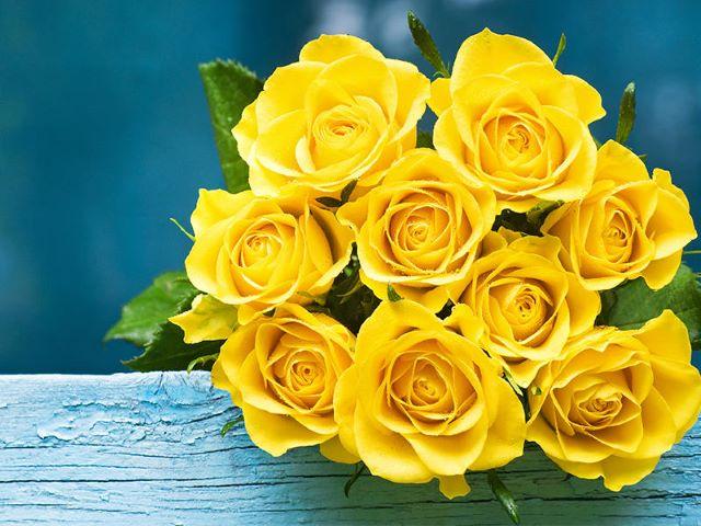 rose gialle immagini