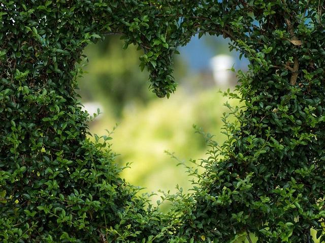 frasi di osho sull amore