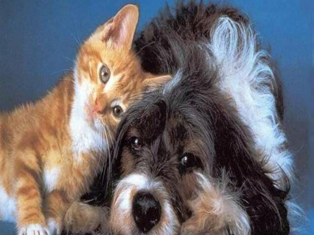 Frasi sui cani e gatti