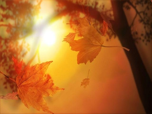 colori d'autunno frasi