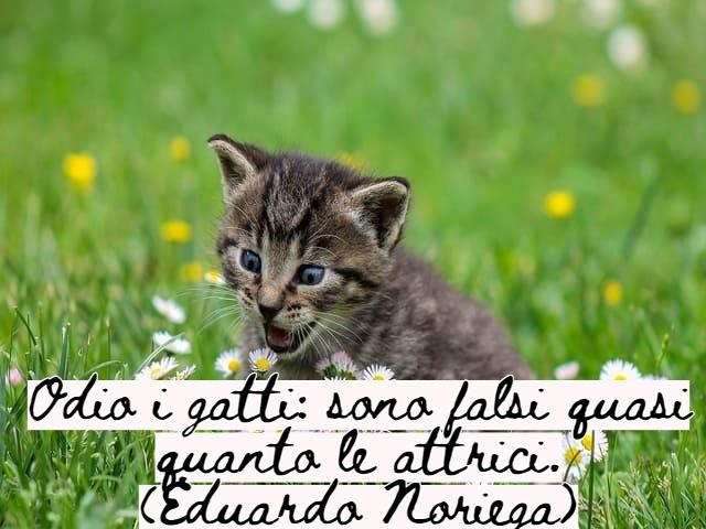 frasi belle sui gatti 1