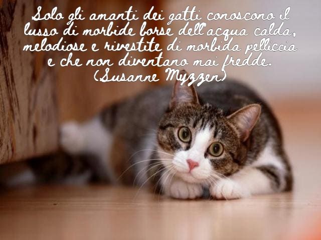 frasi belle sui gatti 2