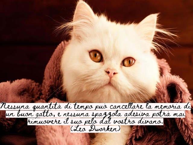 frasi belle sui gatti 3