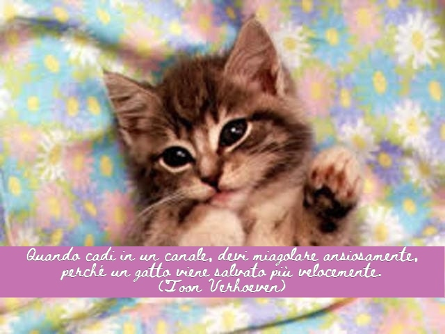 frasi celebri sui gatti