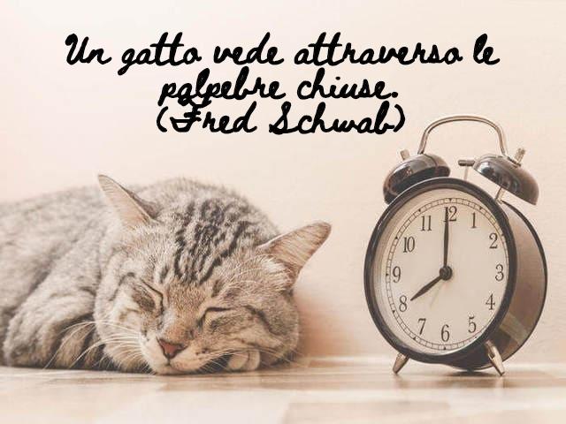 frasi gatti