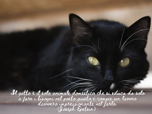 frasi per gatti 1