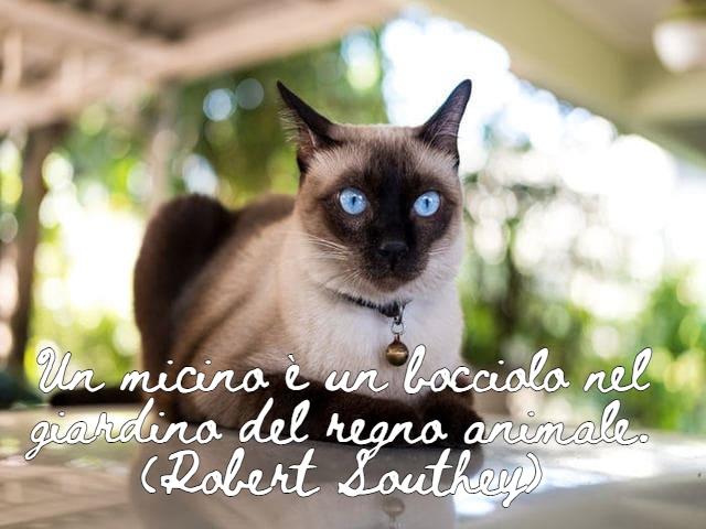 frasi sui gatti belle