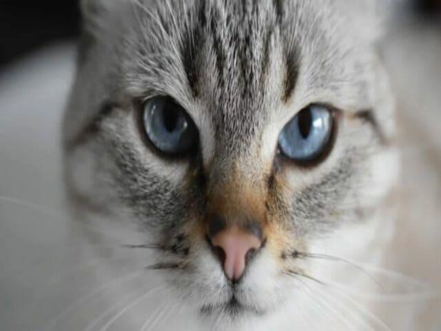 frasi sui gatti in inglese