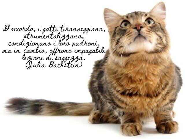 immagini di gatti divertenti con frasi 11