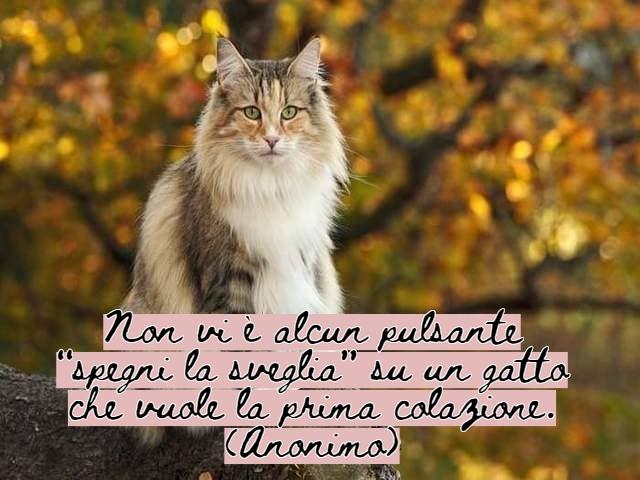 immagini di gatti divertenti con frasi 13