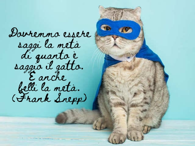 immagini di gatti divertenti con frasi 2