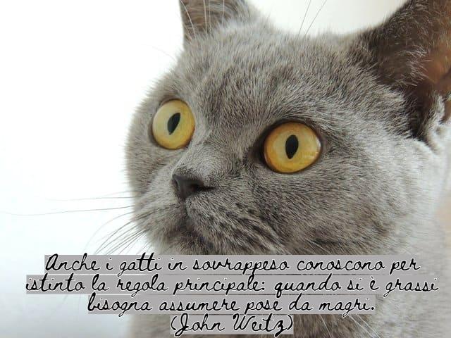 immagini di gatti divertenti con frasi 4