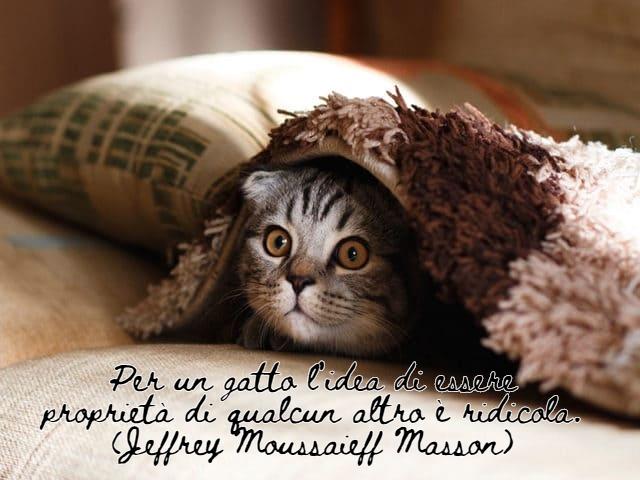 immagini di gatti divertenti con frasi 5
