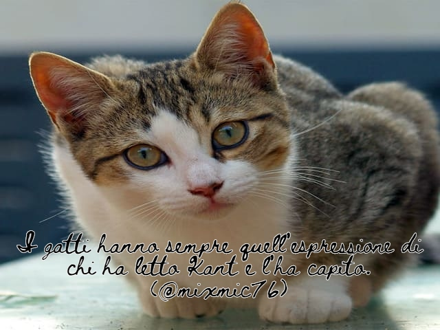 immagini di gatti divertenti con frasi 6