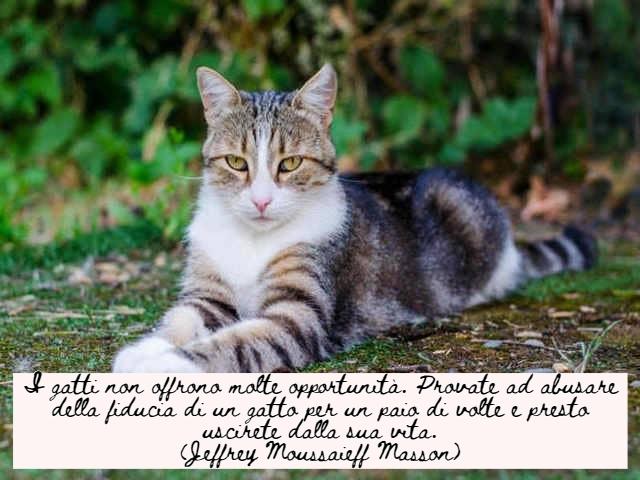 immagini di gatti divertenti con frasi 8
