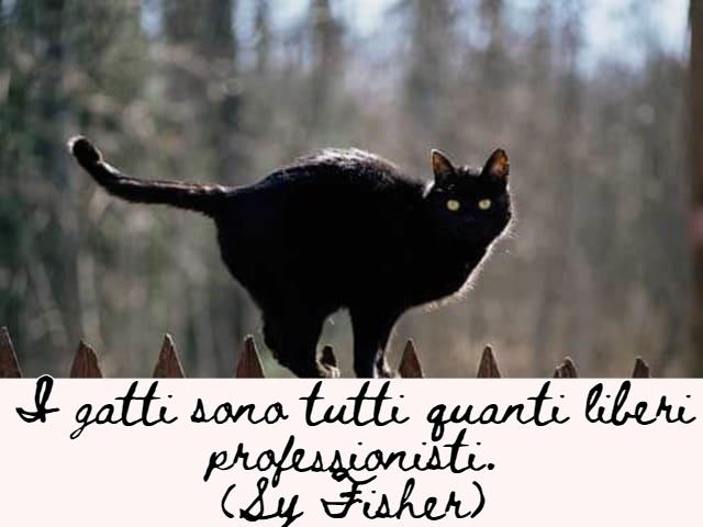 immagini di gatti divertenti con frasi 9