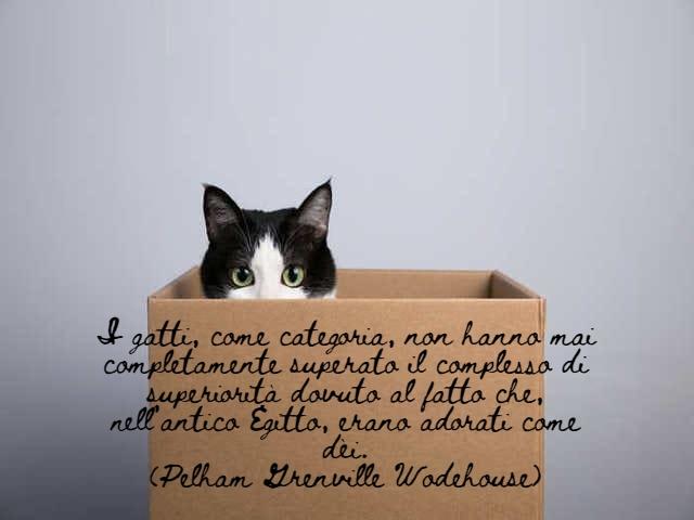 immagini di gatti divertenti con frasi