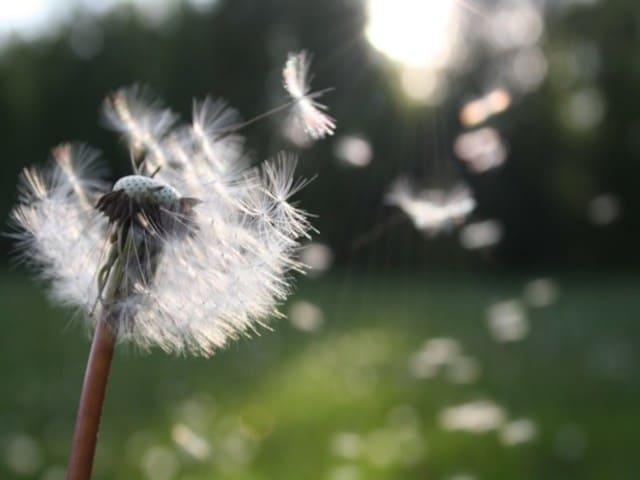 frasi divertenti sul vento